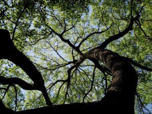 tree-189909_960_720